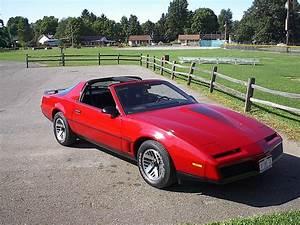 83 Pontiac Trans Am Related Keywords 83 Pontiac Trans Am