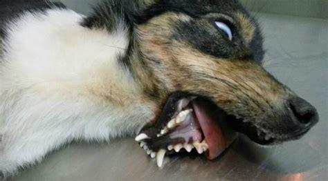 dog wandering  broken jaw   days