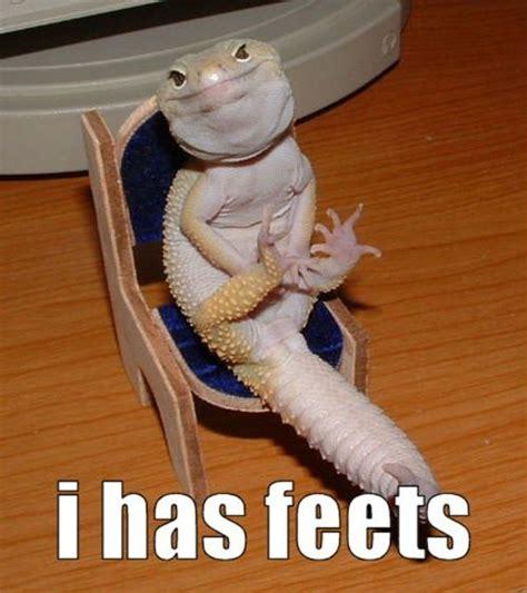 Hehehe Lizard Meme - pinterest the world s catalog of ideas