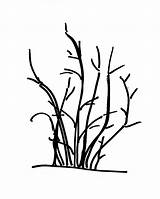 Shrub Drawing Bush Into Train Tree Multi Burning Plant Flowering Distinctive Getdrawings Preview Clipartmag sketch template