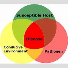 Plant Disease Forecasting Wikipedia