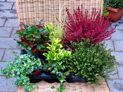 Welche Pflanzen Im Herbst Pflanzen by Winterharte Balkonpflanzen Bilder Balkonpflanzen Tipps