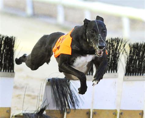 raidio  steve nash photo collection greyhound