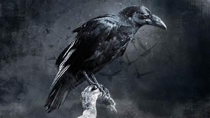 Raven Crow Bird Birds Digital Darkness Desktop