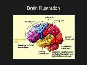 Brainarts