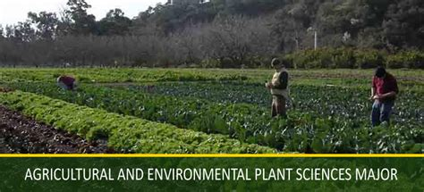 hcs home horticulture crop science cal poly san