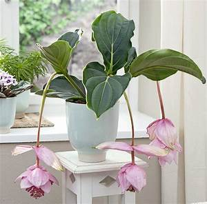 Marc De Café Plantes D Intérieur : quelle plante verte pour quelle pi ce de la maison femmes d 39 aujourd 39 hui ~ Melissatoandfro.com Idées de Décoration