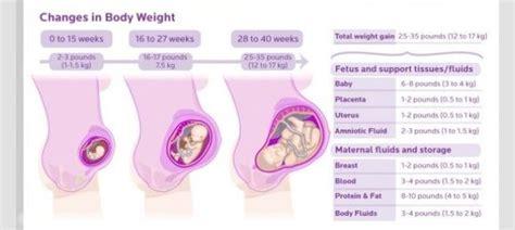 weight gain breakdown  pregnancy pregnancy