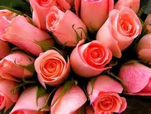flower arrangements imágenes de rosas rosas hermosas por definición