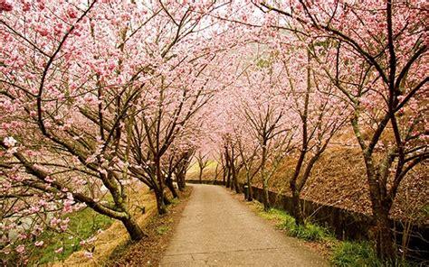 japon en primavera  paisajes espectaculares