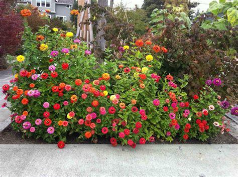 design flower garden flower garden designs tips for successful flower garden design 1000 ideas about flower bed