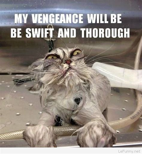 Wet Cat Meme - funny angry wet cat