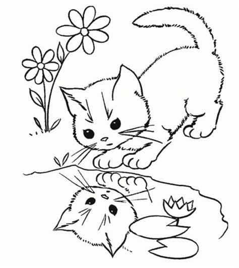 berlatih mewarnai gambar gambar mewarnai kucing anggora