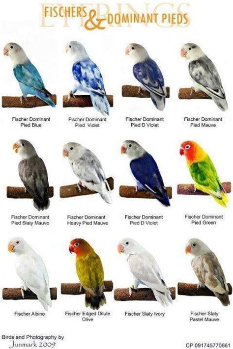 variety of love birds chart paper for kids kidsfunda com