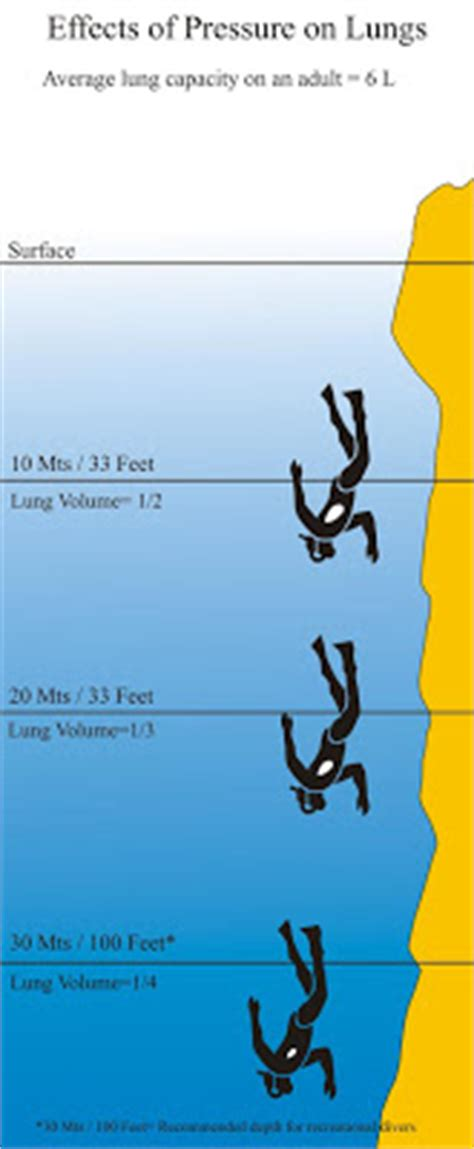 scuba diving blog effects  pressure   diver lungs