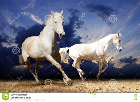 horses running