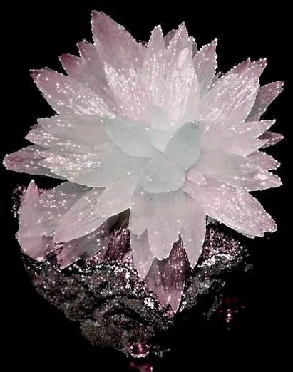 Minerals Rocks Stone Gemstones Mineral Flower Photobucket
