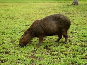 North Traveller  Argentina    Wildlife