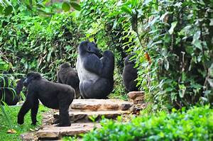 Animals In Bwindi Impenetrable National Park