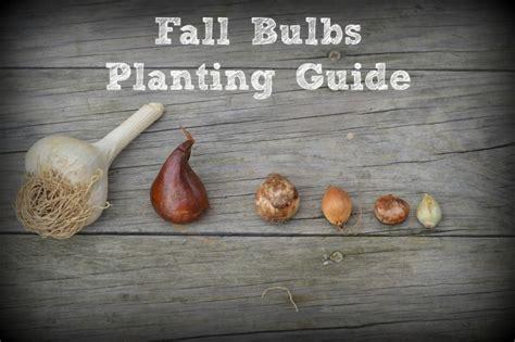 fall bulbs planting guide it forward