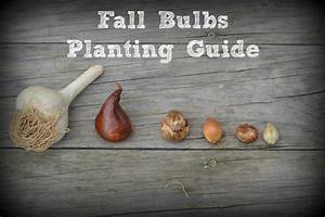 Fall Bulbs Planting Guide