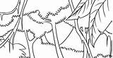 Rainforest Drawing Tree Trees Tropical Wallpapers Draw Pencil Getdrawings sketch template