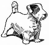 Coloring Dog Jack Russell Terrier Pound Catcher Breed Template sketch template