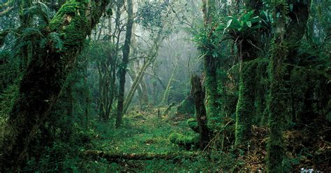 forests  growth finance development march