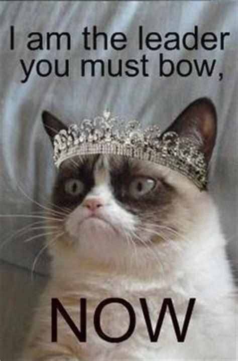 Miserable Cat Meme - miserable cat memes image memes at relatably com