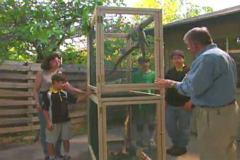 build  iguana cage ron hazelton