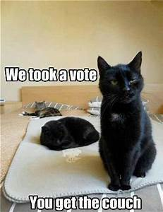 Black Cats with Funny Captions   the vote is in captions 3 ...