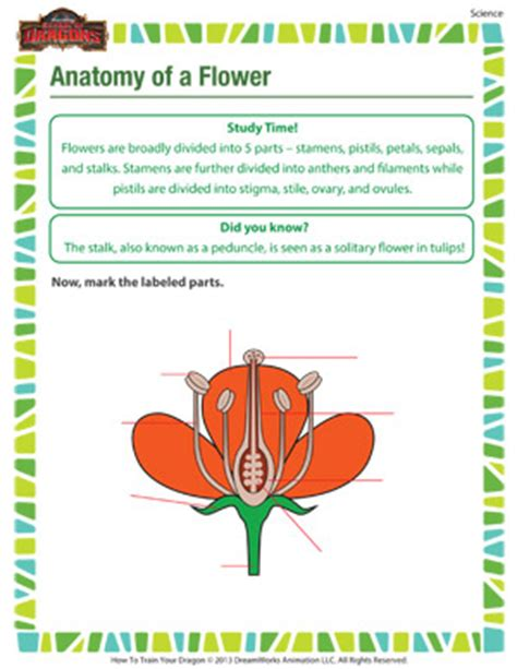 parts of a flower worksheet 4th grade worksheets for all