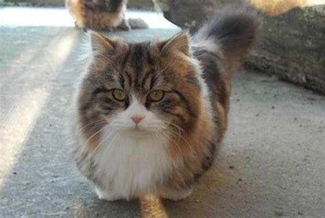 Katze Kleine Wohnung by Kleine Katzenrassen Und Die Kleinste Der Welt