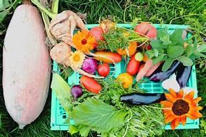 Gemüse Anbauen Plan : gem segarten anbauplan so gelingt dir gem se anbauen ~ Watch28wear.com Haus und Dekorationen