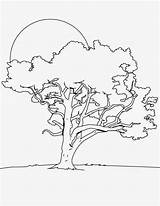 Tree Coloring Oak Trees Night Angel Evergreen Coloriage Drawings Sun Printable Arbres Colorier Arbre Facile Enfants Nouveau Dessin Template Gambar sketch template