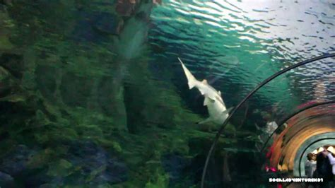 Shark Encounter Dolphins Seaworld San