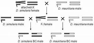 30 Which Diagram Represents A Pair Of Homologous