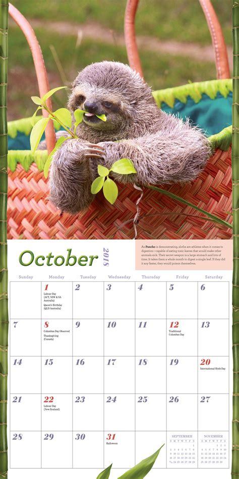 amazoncom sloths wall calendar   lucy cooke books