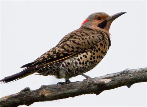 birds  minnesota national state   birds dream