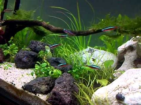 Aquascaping For Beginners by Aquascape Beginner
