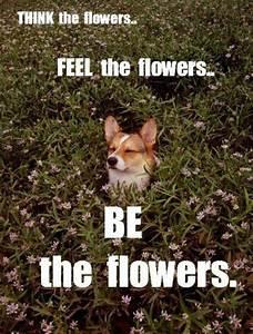 Zen Dog Quotes.... Zen Dog Quotes