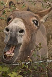 256 best images about I LOVE DONKEYS on Pinterest