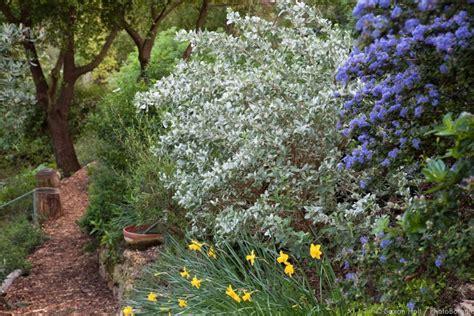 southern california plants seeing the native plant garden photobotanic
