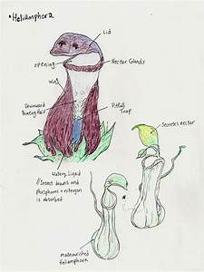 The Carnivorous Plants  Ii  Rival Tribes Of Carniverous Plants Wage War In The Forest Of