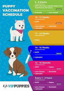 Dog Shots Chart Vaccination Schedule For A Healthy Puppy Vip Puppies
