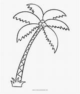Palm Tree Coloring Drawing Pngitem sketch template