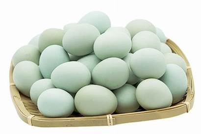 Eggs Duck Salted Egg Singapore