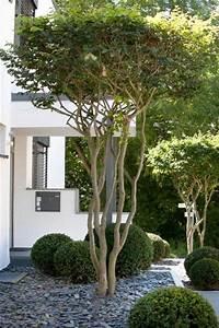Kleine Bäume Vorgarten : toller baum f r den vorgarten die schirmform der ~ Michelbontemps.com Haus und Dekorationen