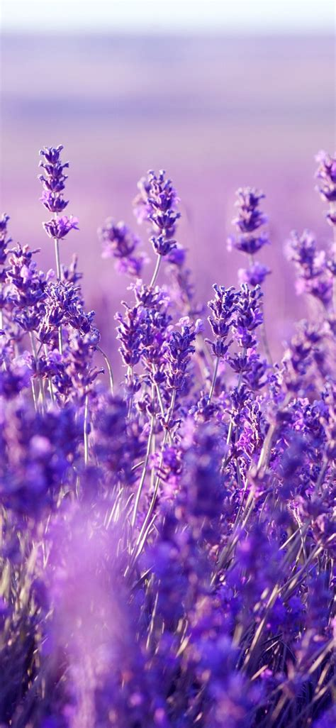 beautiful purple flowers purpleaesthetic