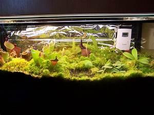 Pflanzen Für Terrarium : bilder vom terrarium fotos gesellschaft f r fleischfressende pflanzen e v ~ Orissabook.com Haus und Dekorationen